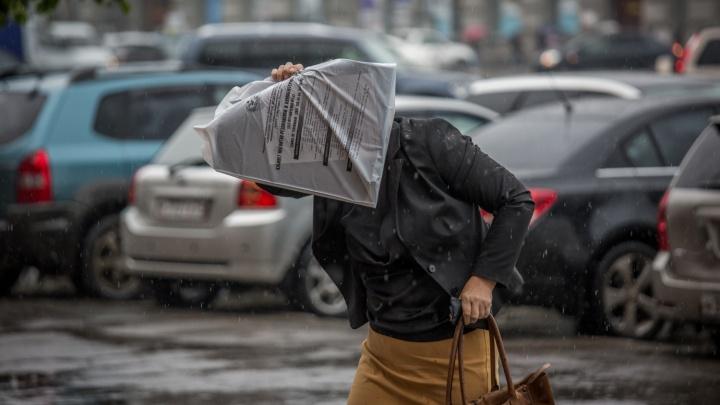 К Новосибирску приближается волна тепла с дождями