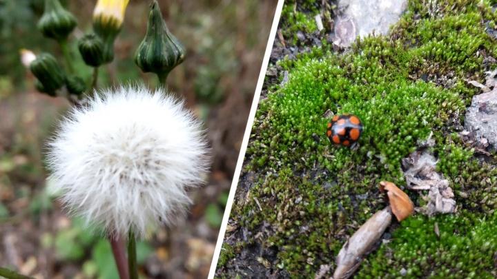 Успела стать фотографом: сибирячка долго ждала трамвай и начала красиво снимать мох