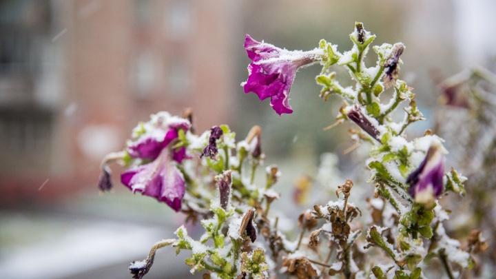 Зима близко: август в Новосибирске закончится заморозками