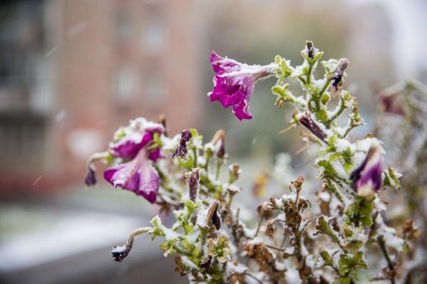 В последней декаде августа новосибирцев ждут заморозки