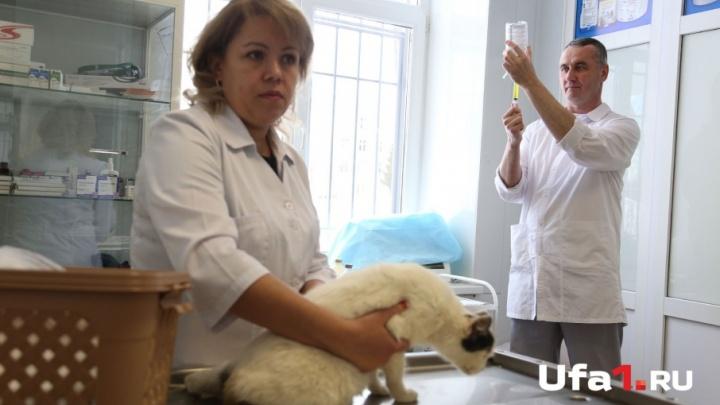 Доктор, помоги: Айболит из Уфы рассказал, почему бродячих животных лечит бесплатно