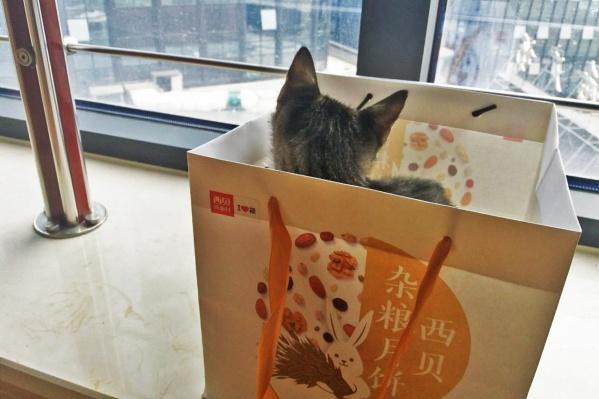 Котёнка подбросили к отелю в августе, когда ему было чуть больше месяца