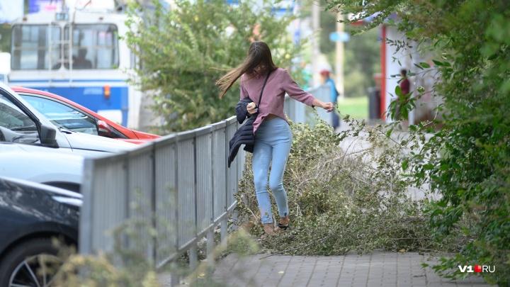 Машины под деревьями, ветки и сорванная реклама: ураган в Волгограде не щадит никого — фоторепортаж