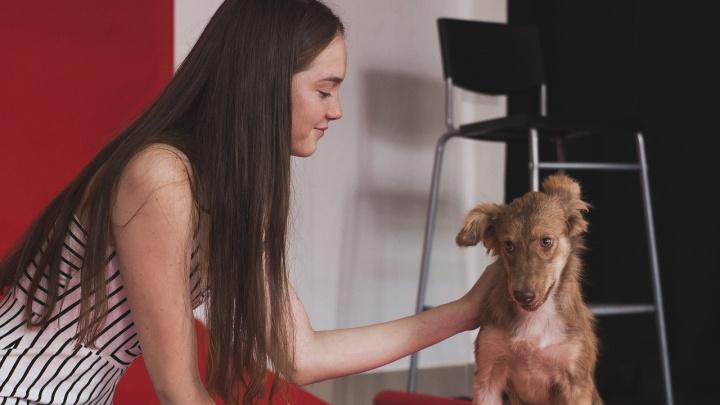 Бездомным котам и собакам устроили красивую фотосессию с моделями