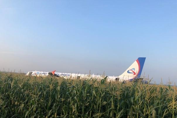 Самолет «Уральских авиалиний», экстренно севший в кукурузном поле, начали разбирать