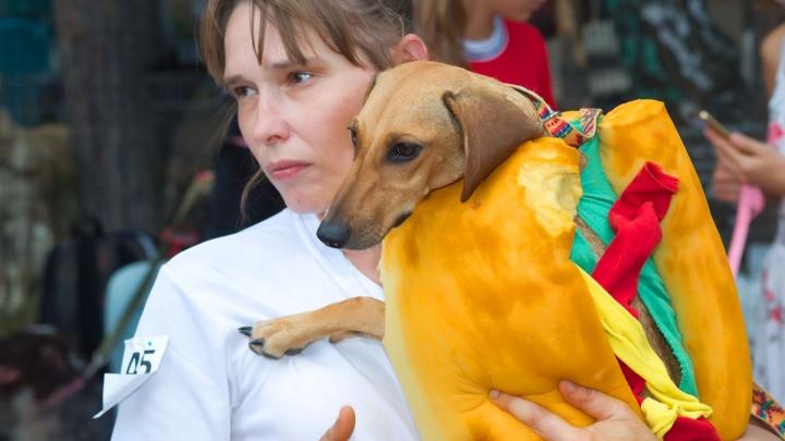 Собака-мушкетёр и живой хот-дог: челябинцы привели костюмированных животных на фестиваль