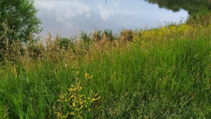 Август дарит Кургану еще неделю тепла, хоть и с дождями