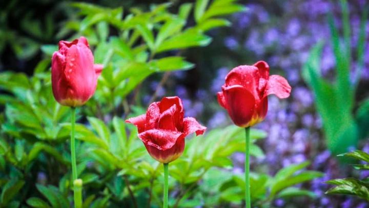 Украсить инстаграм: десять потрясающих фото цветущего Волгограда