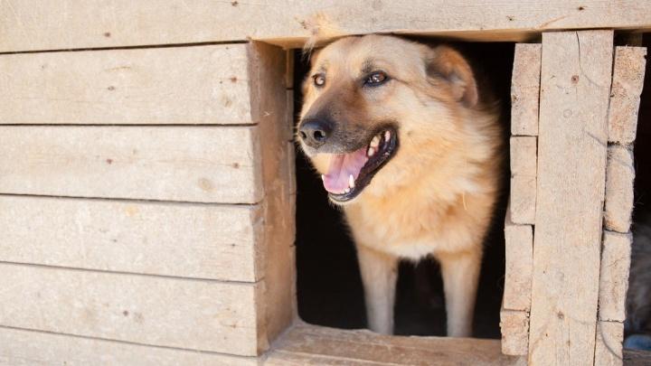 С собаками на выход: катунинский приют опять выселяют