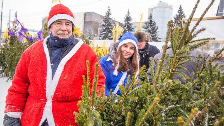 Ёлка станет десертом: ярославцев попросили сдать зелёные деревья сразу после праздников