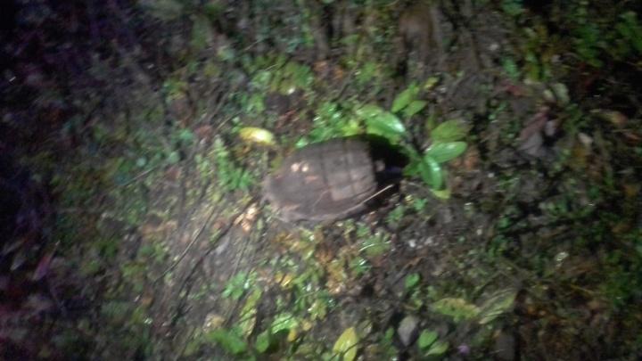 Под Красноярском нашли вторую за неделю гранату Первой мировой войны