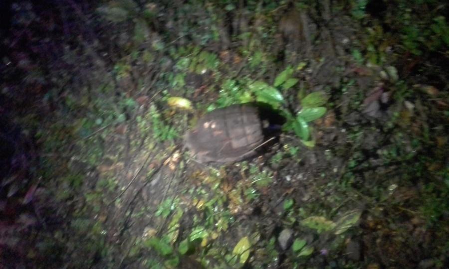 ВКрасноярском крае отыскали боевую гранату 100-летней давности