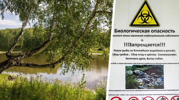 Мутные воды: у озера под Новосибирском появились щиты биоопасности. Кто их поставил — неизвестно