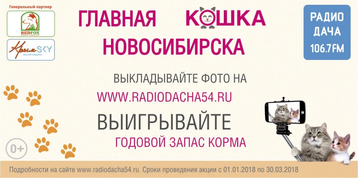 На звание «Главная кошка Новосибирска 2018» отобрали шесть участников