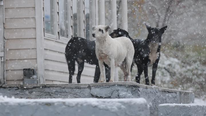 «Благие намерения ведут в ад»: екатеринбурженка — о том, почему не стоит забирать брошенных животных