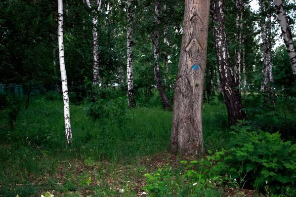Скелет лежал в лесу в районе Бердского электромеханического завода