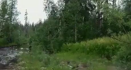 Норильчане дважды заметили медведя в черте города