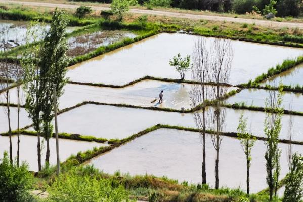 Киргизия,окрестности реки Нарын