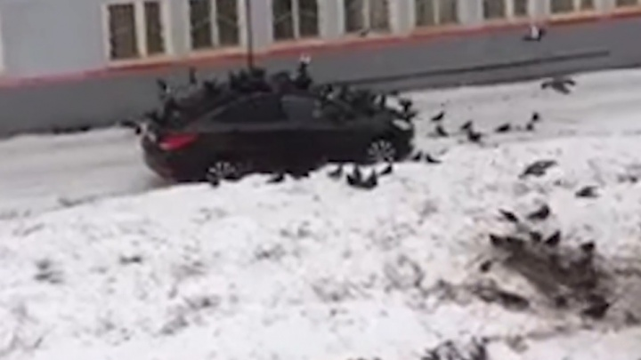 Машину жителя Башкирии атаковали голодные голуби