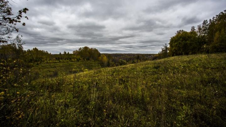 Золотые гектары: кому на самом деле раздали землю под Барышево