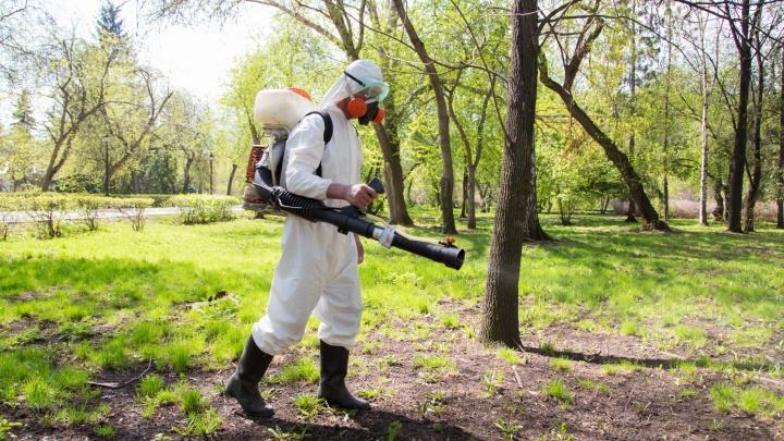Можно будет гулять безопасно: рассказываем, когда Шарташский лесопарк обработают от клещей