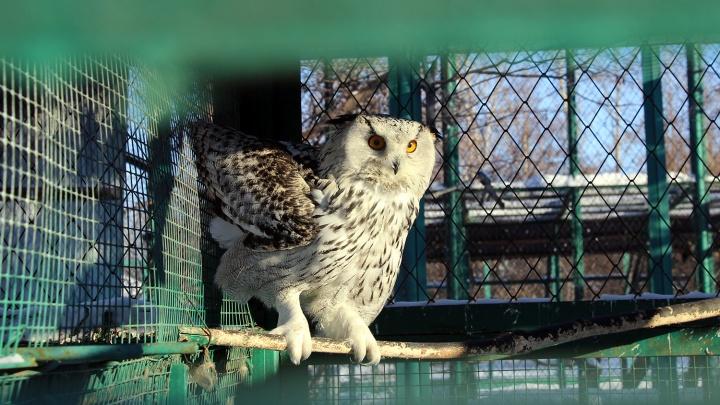 Нахохлились: смотрим, как переносят холода животные омского зоопарка
