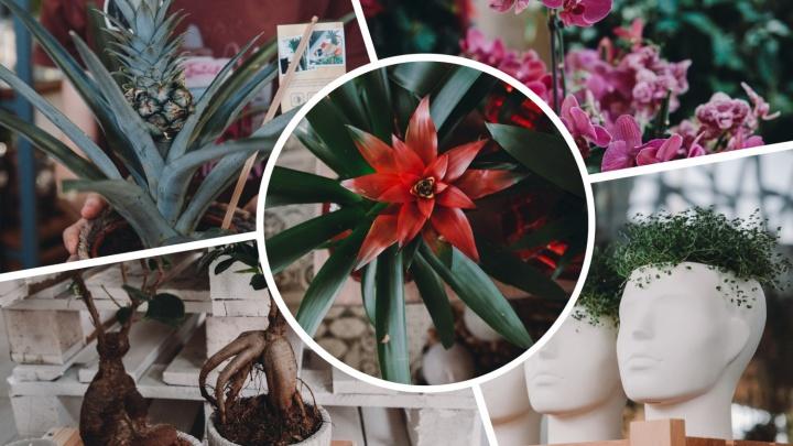Гордая Ванда, волосистая «мочалка» и ананас: топ-5 странных растений, которые можно найти в Тюмени