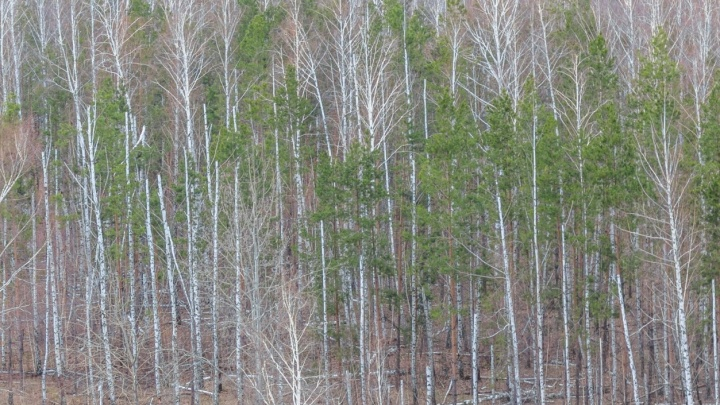 «Не ходите в лес»: в регионе сохранится высокий уровень пожароопасности