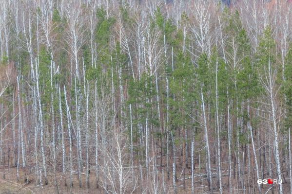По оценкам эмчээсников, сейчас леса в регионе наиболее уязвимы для огня