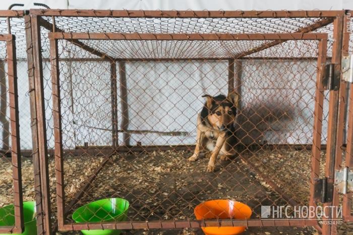 Суд посчитал владельца виноватым, так как пес был ненадежно привязан