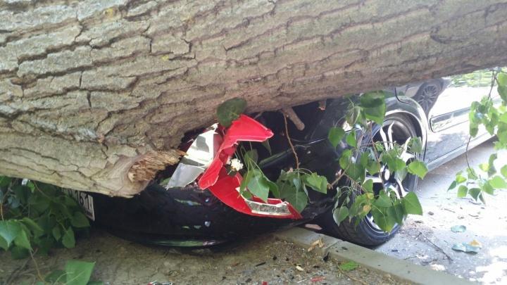 В Ростове рухнул старый тополь: повреждены пять автомобилей