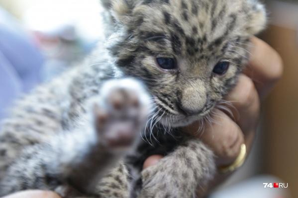 Малышка попала в приют диких животных в начале июля, её назвали Евой