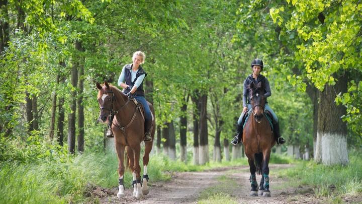 Конные прогулки на свежем воздухе