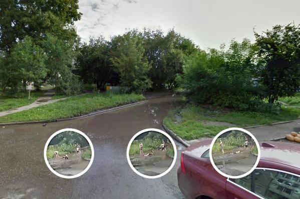 Глубокая лужа появлялась во дворе на Зорге и прежде — в 2017 году её снимок попал на панорамы «Гугл»