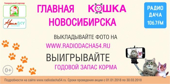 «Радио Дача» выбирает главную кошку города