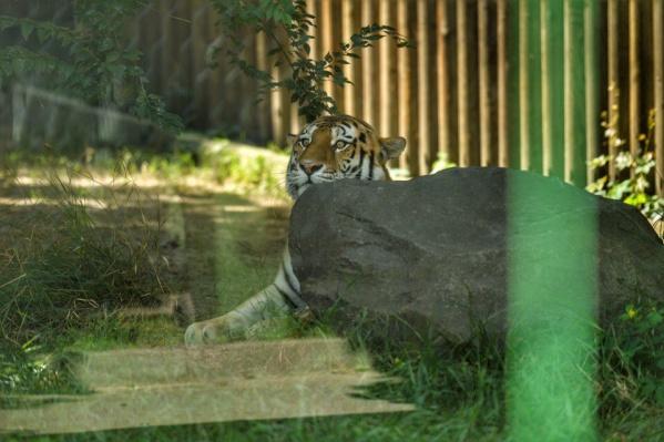 До появления в Ростовском зоопарке Устин успел несколько лет пожить на воле