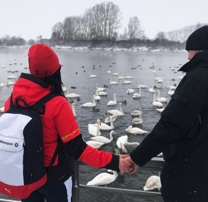 На лебедином озере получаются красивые романтические фотографии