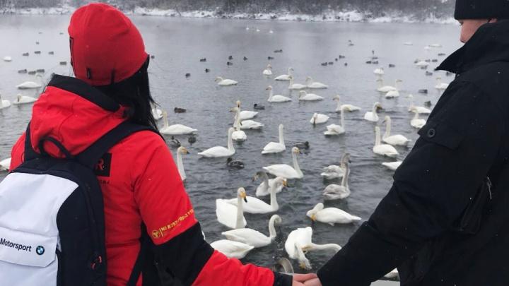 Новосибирец подарил любимой жене на день рождения озеро с лебедями