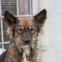 «Кусают свои»: в Самарской области обнародовали статистику нападений животных на людей