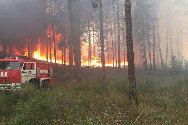 Огонь быстро распространялся по сухой траве