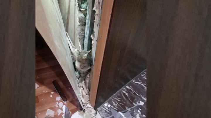 """""""Хозяин отблагодарил шашлыком"""": в Екатеринбурге посетители кафе спасли кошку, которая провалилась в стену"""