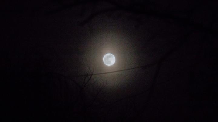 Над Новосибирском взошла огромная Луна