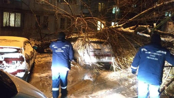 За ночь в Ростове пять деревьев из-за непогоды рухнули на автомобили
