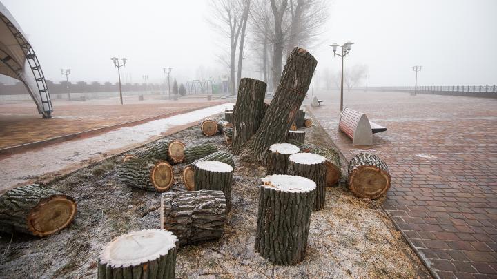 В Левобережном начали вырубку деревьев. Администрация парка объяснила, зачем это было нужно