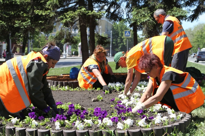 Улицы Кемерово украсили клумбы в виде растений и животных (фото)