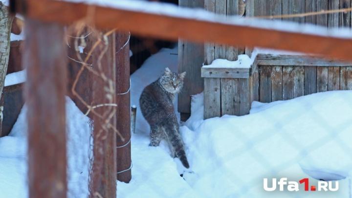 Из-за кота село в Башкирии два месяца просидело в карантине