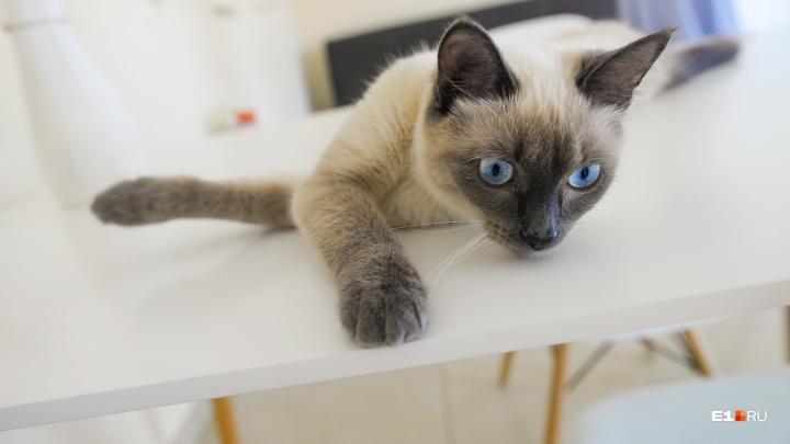 Урчащая Универсиада: история бездомной кошки, которую назвали в честь Игр