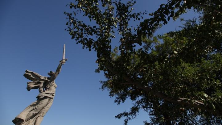 Привет из Мезозоя: на Мамаевом кургане впервые заплодоносило живое ископаемое