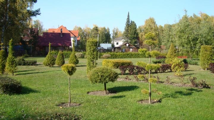 В ботсаду открыли выставку деревьевс красивой стрижкой