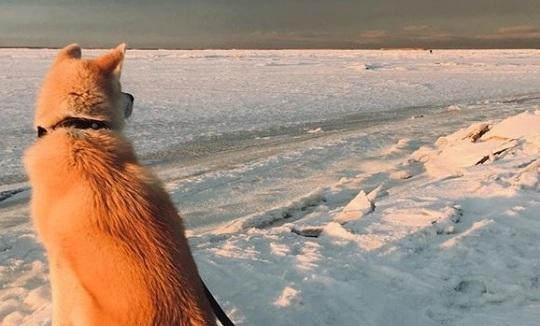 Невероятные рассветы и снежные дали: 15 инстаграм-фото, заставляющих влюбиться в северную зиму